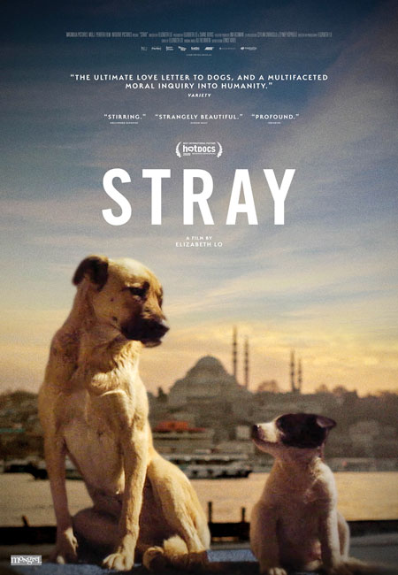Stray - Le monde des chiens errants